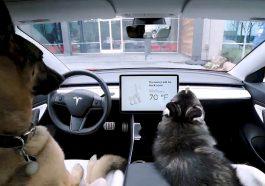 Tesla-Mode-Chien-Dog-Mode